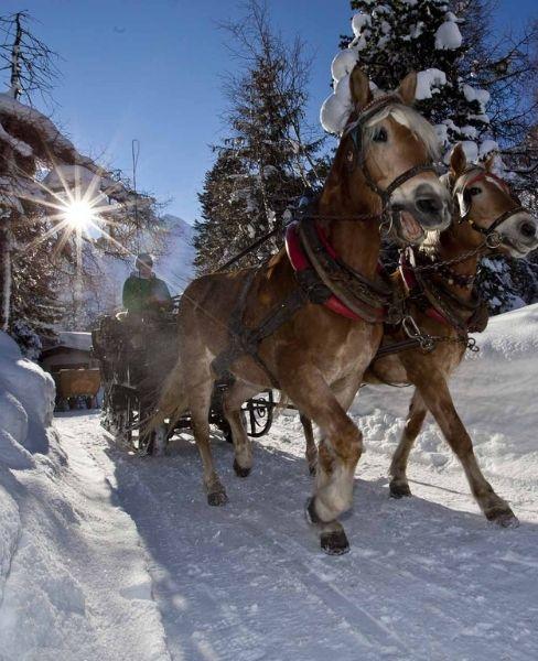 Kutschefahren im Winter